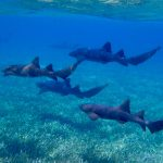 Haie sind nur eine Gefahrenquelle die Ihnen beim Schnorcheln begegnen kann.