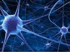 Neurophysiologische Hintergründe zu Faszien